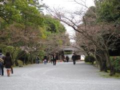 櫻は3分咲き程度