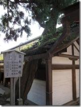 枝が屋根から突き出ている
