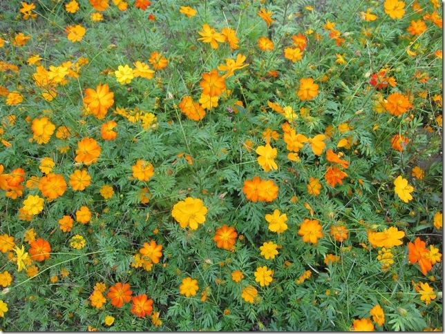 般若寺の庭にあった花
