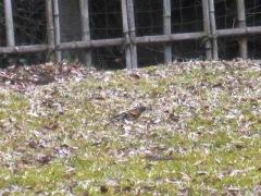 庭で遊んでいる鳥たち